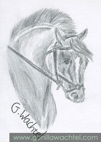 eBay Auction Horse Pencil Drawing ACEO Gunilla Wachtel