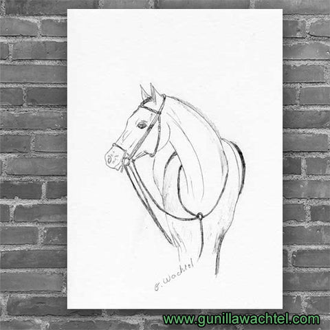 Eyes on the Prize - Print - Horse Drawing - Gunilla Wachtel