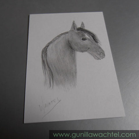 Another horse ACEO drawing Gunilla Wachtel