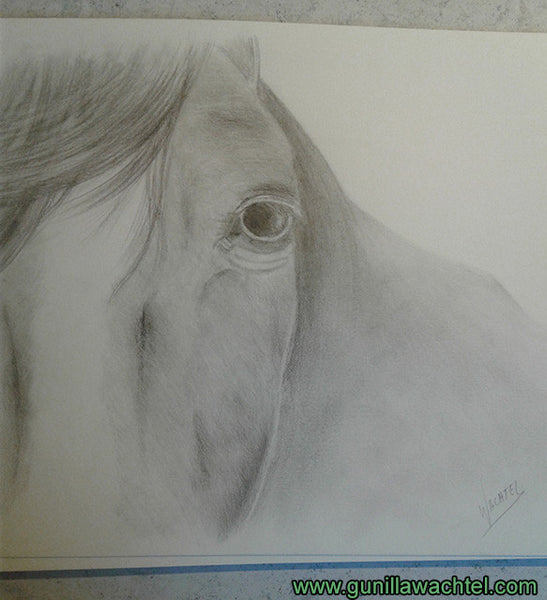 Horse pencil drawing - Trust - Gunilla Wachtel