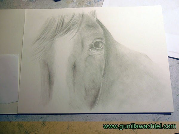 Horse Pencil Drawing Equine Art Gunilla Wachtel