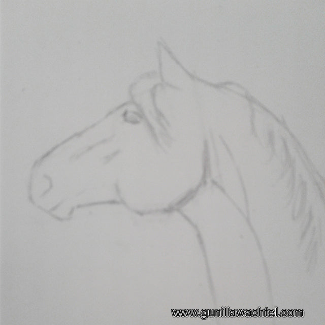 horse head sketch Gunilla Wachtel equine and other animal artist
