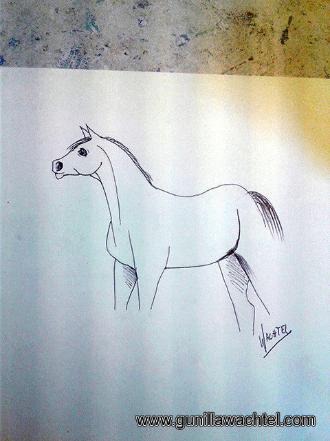 Horse Sketch Drawing Art Gunilla Wachtel
