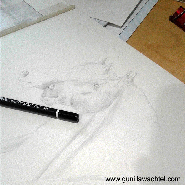 horse artwork drawing in progress equine art Gunilla Wachtel