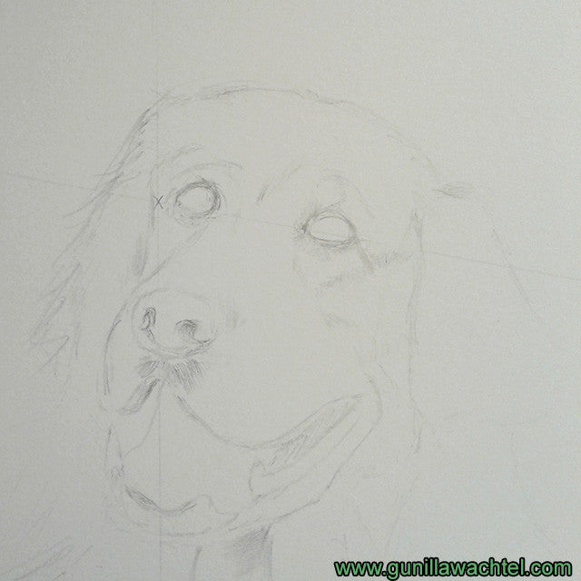 Dog drawing artwork in progress pencil art Gunilla Wachtel