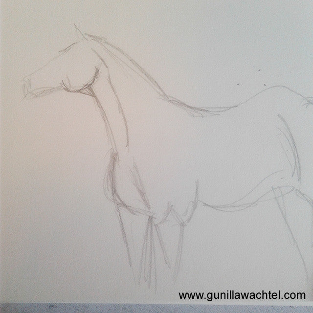 Horse Sketch Drawing Gunilla Wachtel