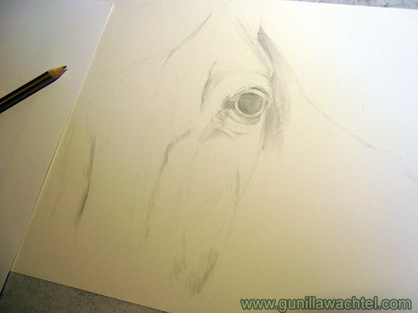 Horse Drawing Work in Progress Gunilla Wachtel Pic 3