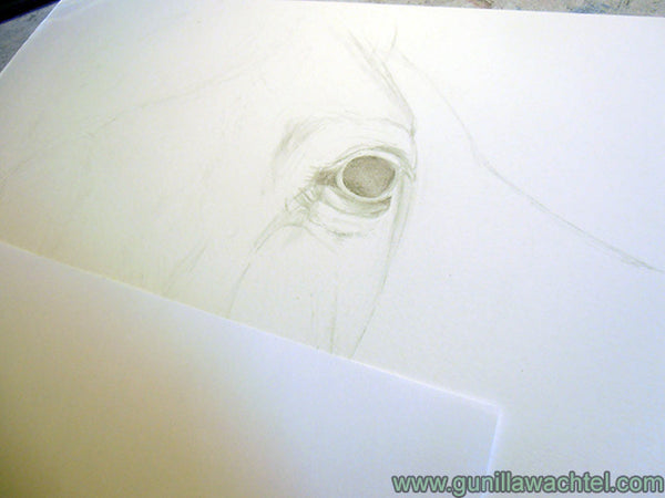 Horse Drawing Work in Progress Gunilla Wachtel Pic 1