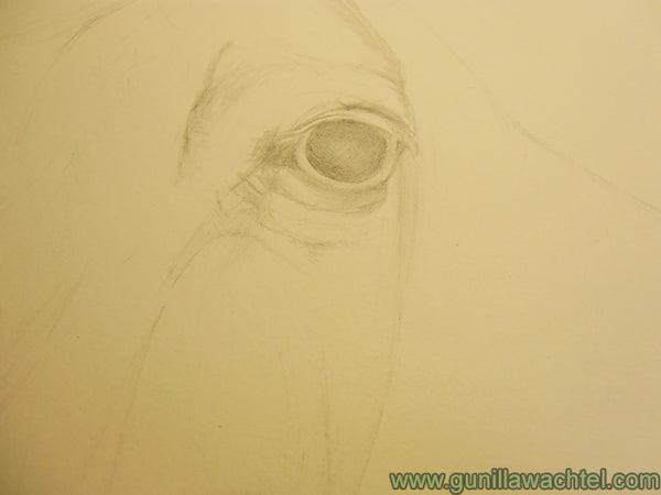 Horse Drawing Work in Progress Gunilla Wachtel Pic 2