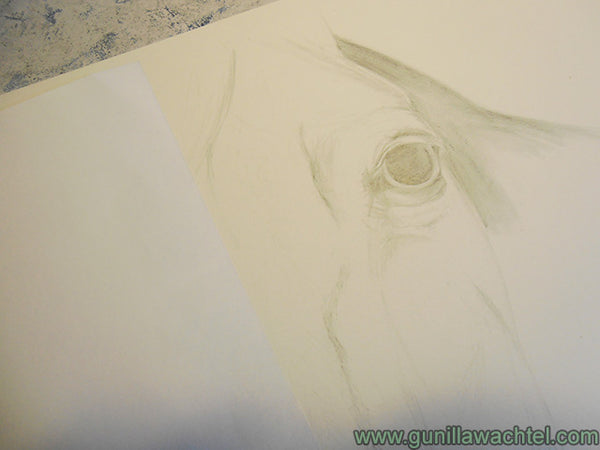 Horse Drawing Work in Progress Gunilla Wachtel Pic 4