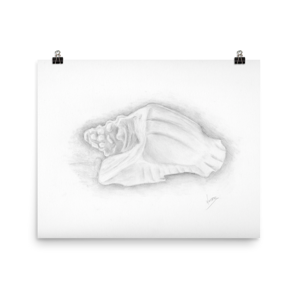 Conch shell drawing art beach ocean poster print pencil drawing