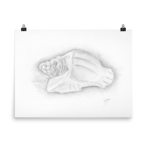 Conch shell drawing art beach ocean poster print artwork