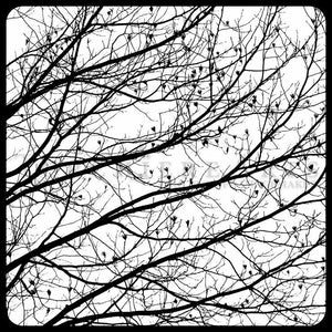 Bare Tree Silhouette, Winter Tree Photography, Bare Tree Art, Black And White Photography Print, Tulip Poplar Art, Liriodendron Wall Art