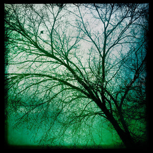 Winter Tree, Winter Photography, Aqua, Teal Green Art, Ethereal Tree Wall Art, Bare Tree, Cherry Tree Silhouette, Nature Photography