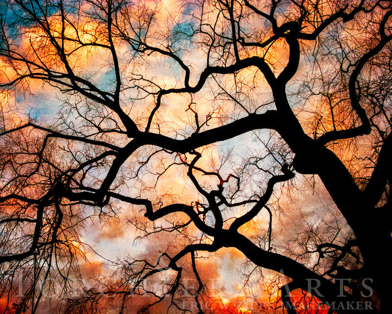 Tree Photography, Elm Tree, Winter Tree Silhouette At Sunset, Nature Photography, Orange Black Wall Art, Bare Tree Art Print, Old Tree