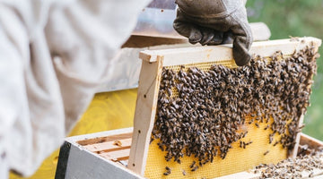 Inspecting Your Honey Bee Hive in the Spring