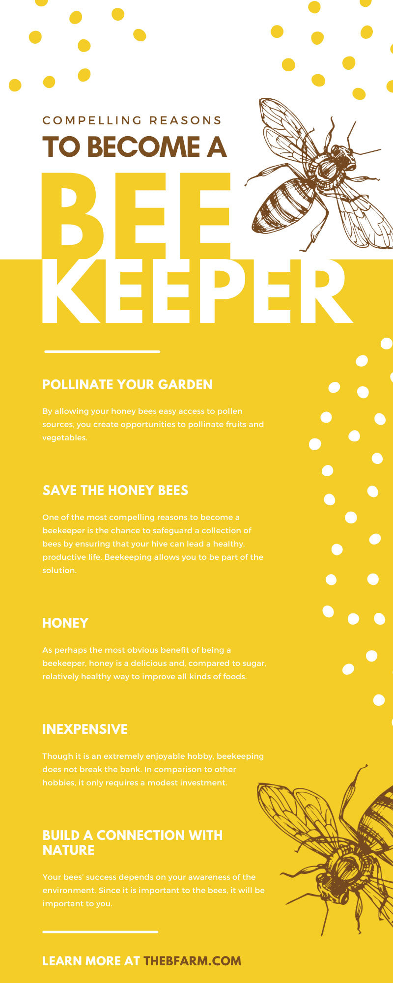 Compelling Reasons To Become a Beekeeper