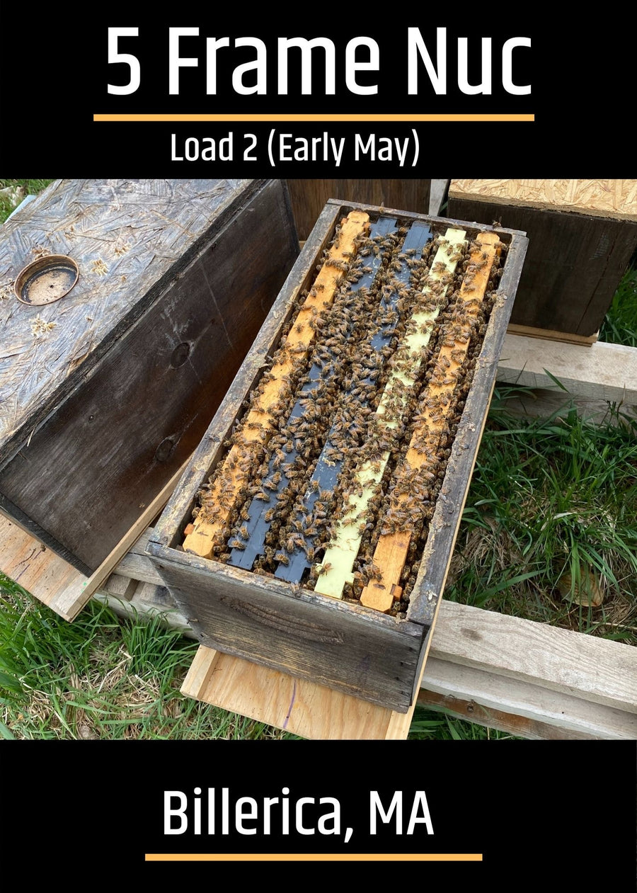 Billerica, MA Load 3 (Mid-May) Northeast 5 Frame Nucs