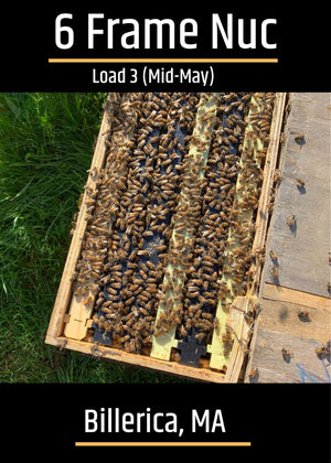 Billerica, MA Load 3 (Mid - May) Northeast 6 Frame Nucs