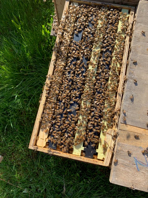 Billerica, MA Load 4 (Late May) Northeast 6 Frame Nucs