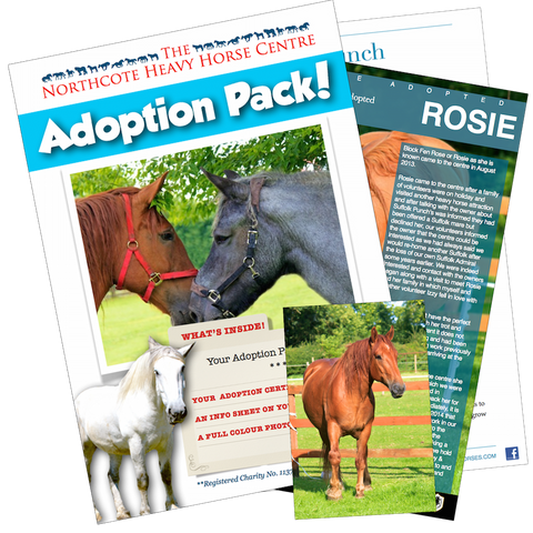Sponsor a Horse or Animal