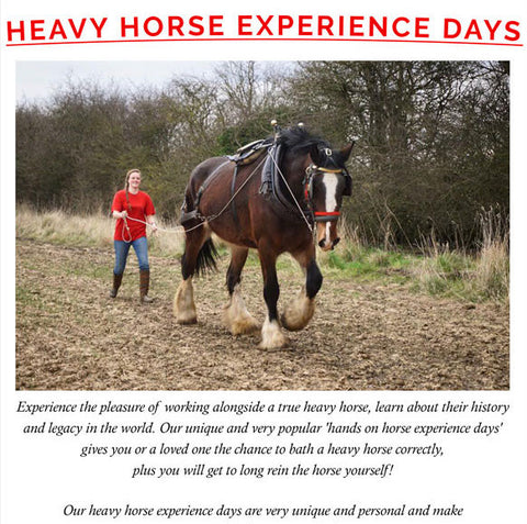 Heavy Horse Experience Red Letter Days Gift Poster