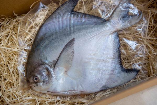 chinese pomfret sale singapore