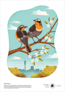 Cape Robin - A2 print by Eva Faerch