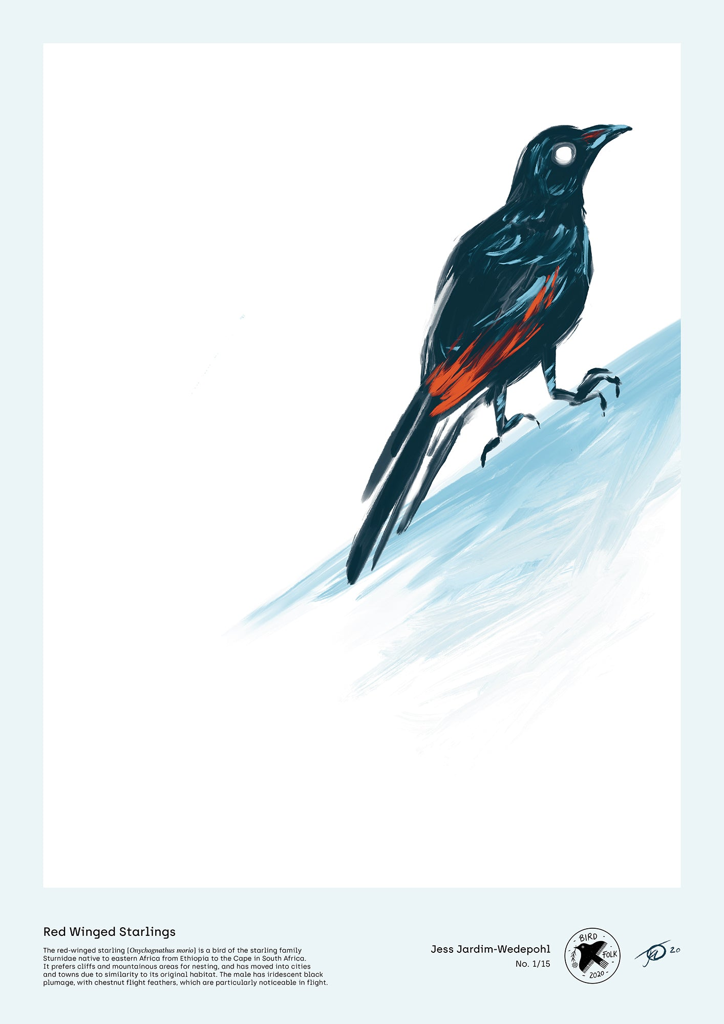 Red Winged Starlings - A2 print by Jess Jardim-Wedepohl