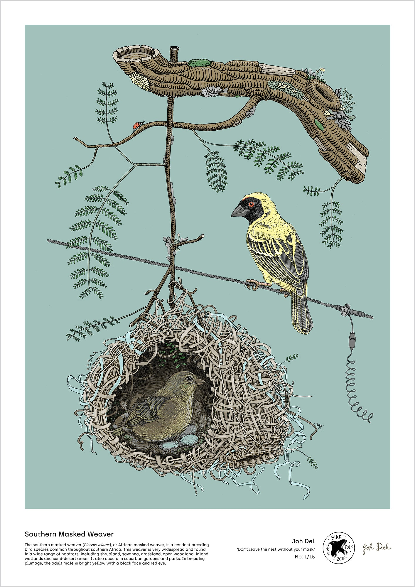 Southern Masked Weaver - A2 print by Joh Del