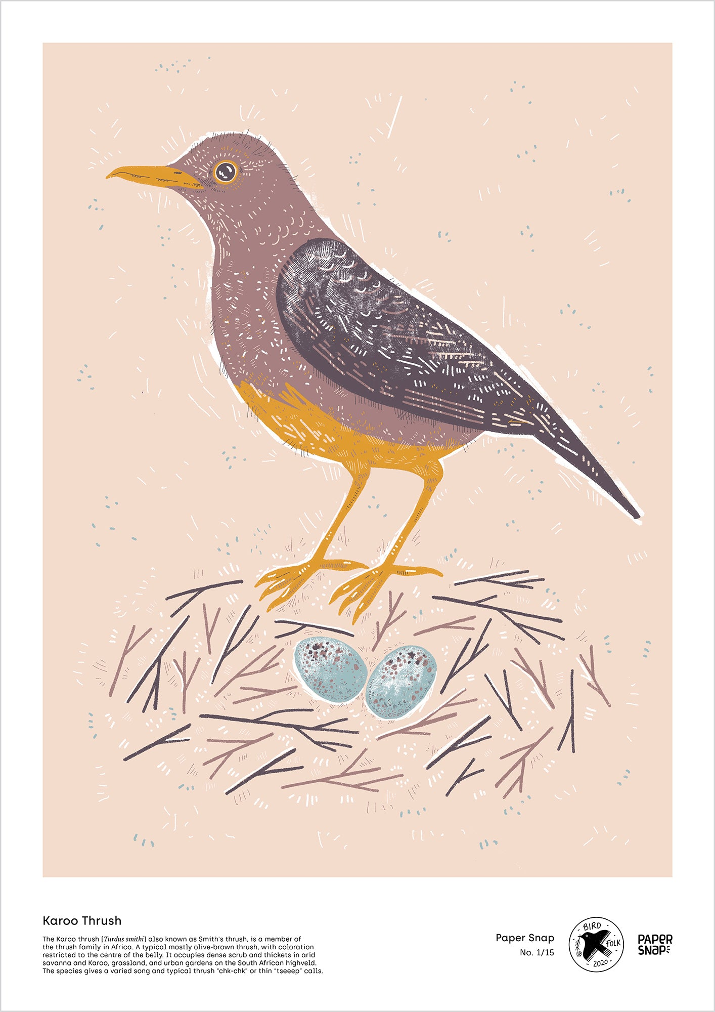 Karoo Thrush - A2 print by Paper Snap