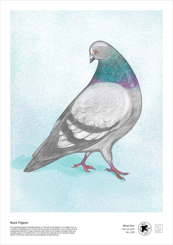 Rock Pigeon - A3 digital file by Nina Torr