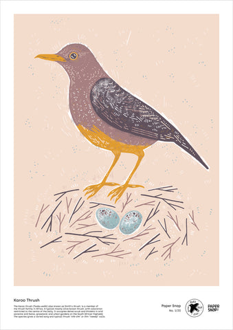 Karoo Thrush - A3 digital file by Paper Snap