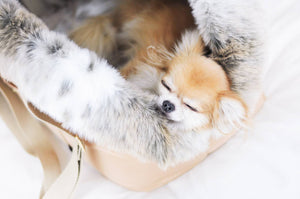 Dog Cupido Luxury Carrier Beige