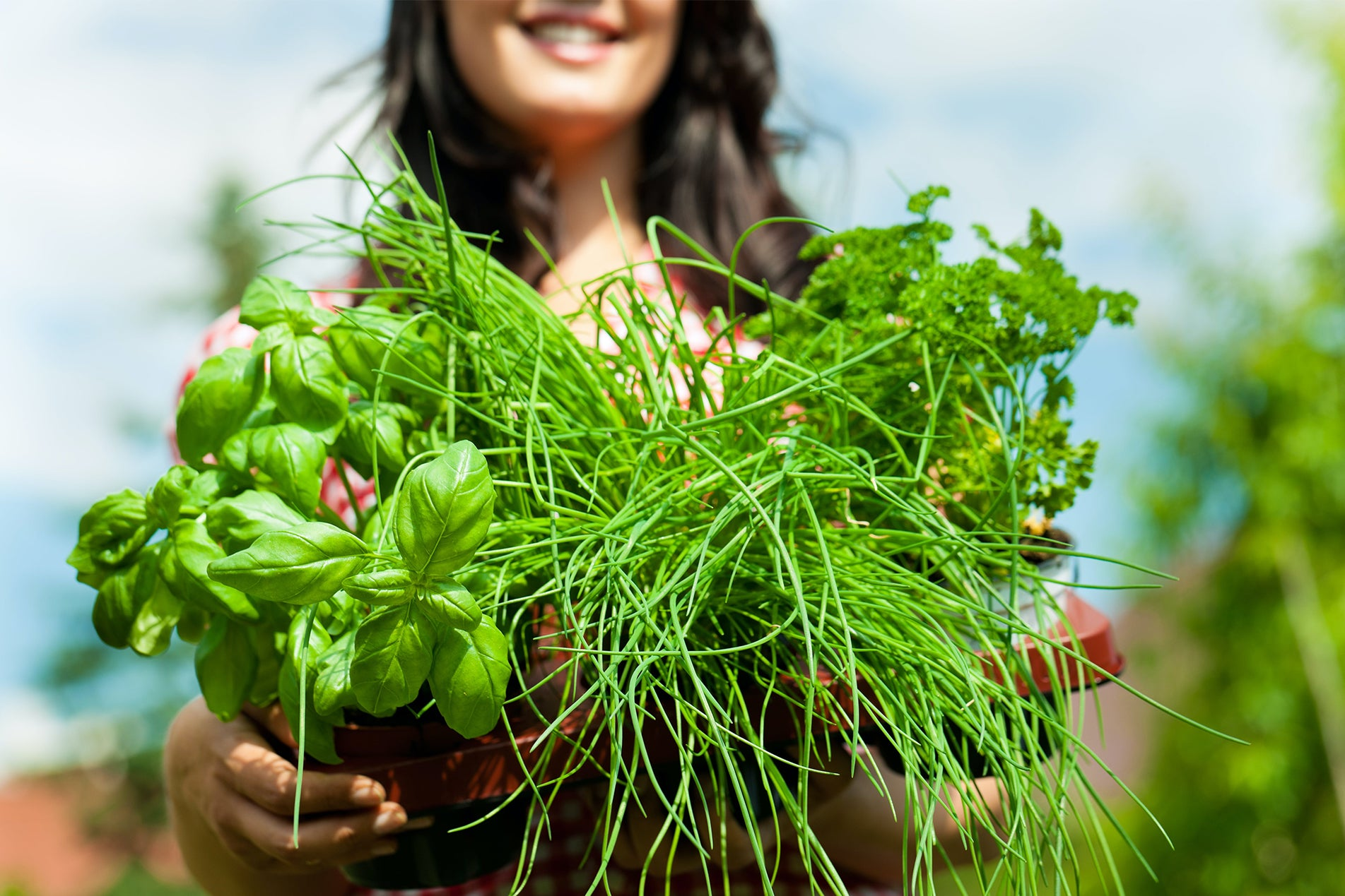 Beginner's Guide to Herb Gardening