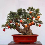 cozyrex,Egrow 30Pcs/Pack Pomegranate Seeds Sweet Delicious Indoor Fruit Seeds Pomegranate Mini Bonsai Tree,CozyRex,