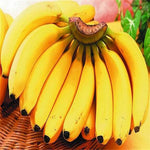 cozyrex,Egrow 200Pcs Garden Banana Seeds Outdoor Dwarf Fruit Trees Banana Milk Taste Perennial Potted Fruit,CozyRex,