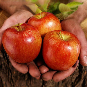 cozyrex,Egrow 100 Pcs/Pack Apple Tree Seeds Garden and Home Potted Fruit Red Apple Seed Bonsai Plants,CozyRex,