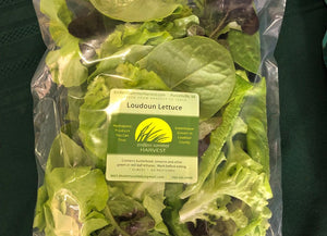 Endless Summer Harvest - Loudoun Lettuce