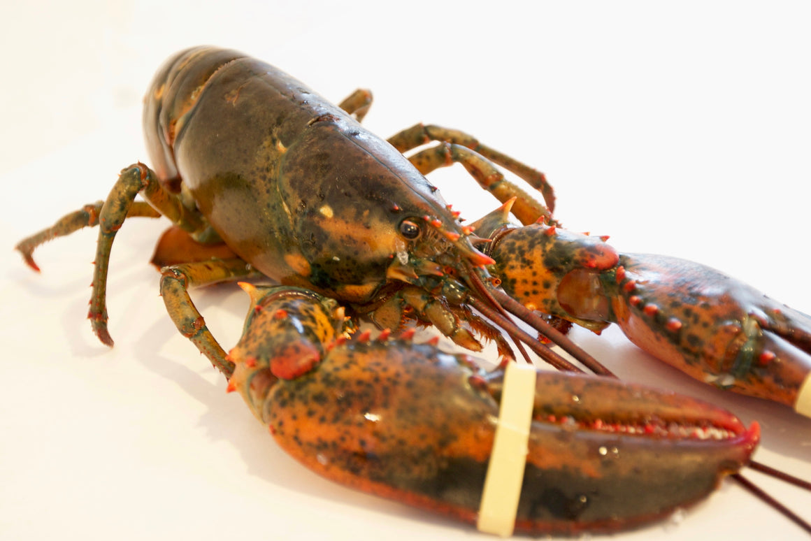 Whole Live Lobster - The Organic Butcher of McLean
