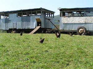 Local Pasture-Raised Eggs - The Organic Butcher of McLean