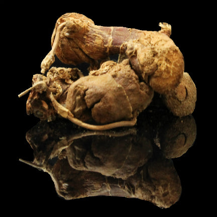 Galangal Root Whole