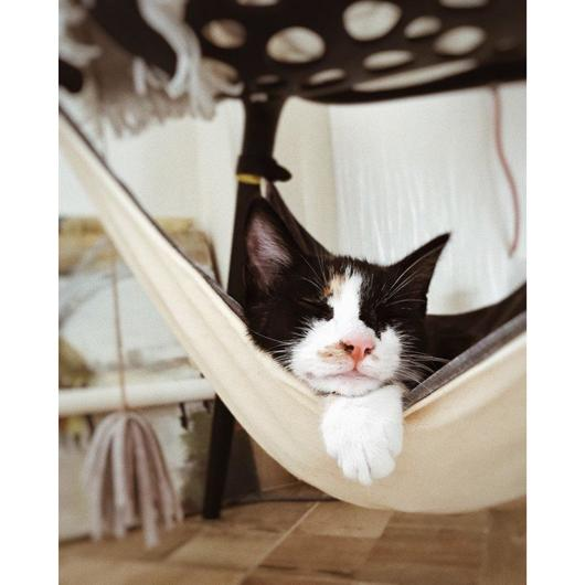 Kitten Crib Hammock Lounger - Pawhacks