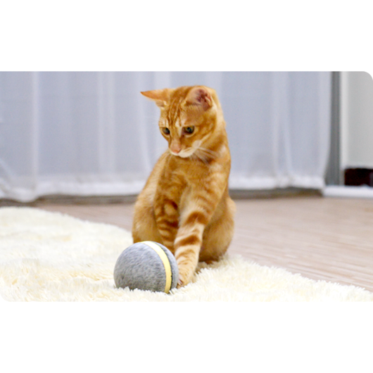 DELUXE Fun Motion Wicked Ball (Interactive Pet Toy) - Pawhacks