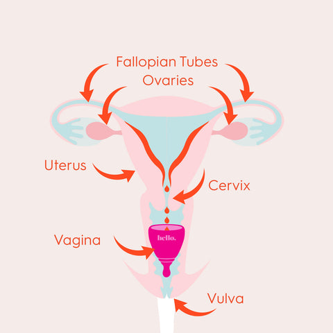 Uterus tampons tilted and What's a