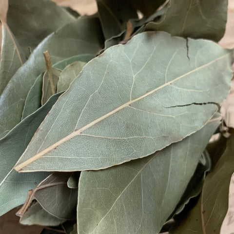 Bay leaf (Laurus nobilis)