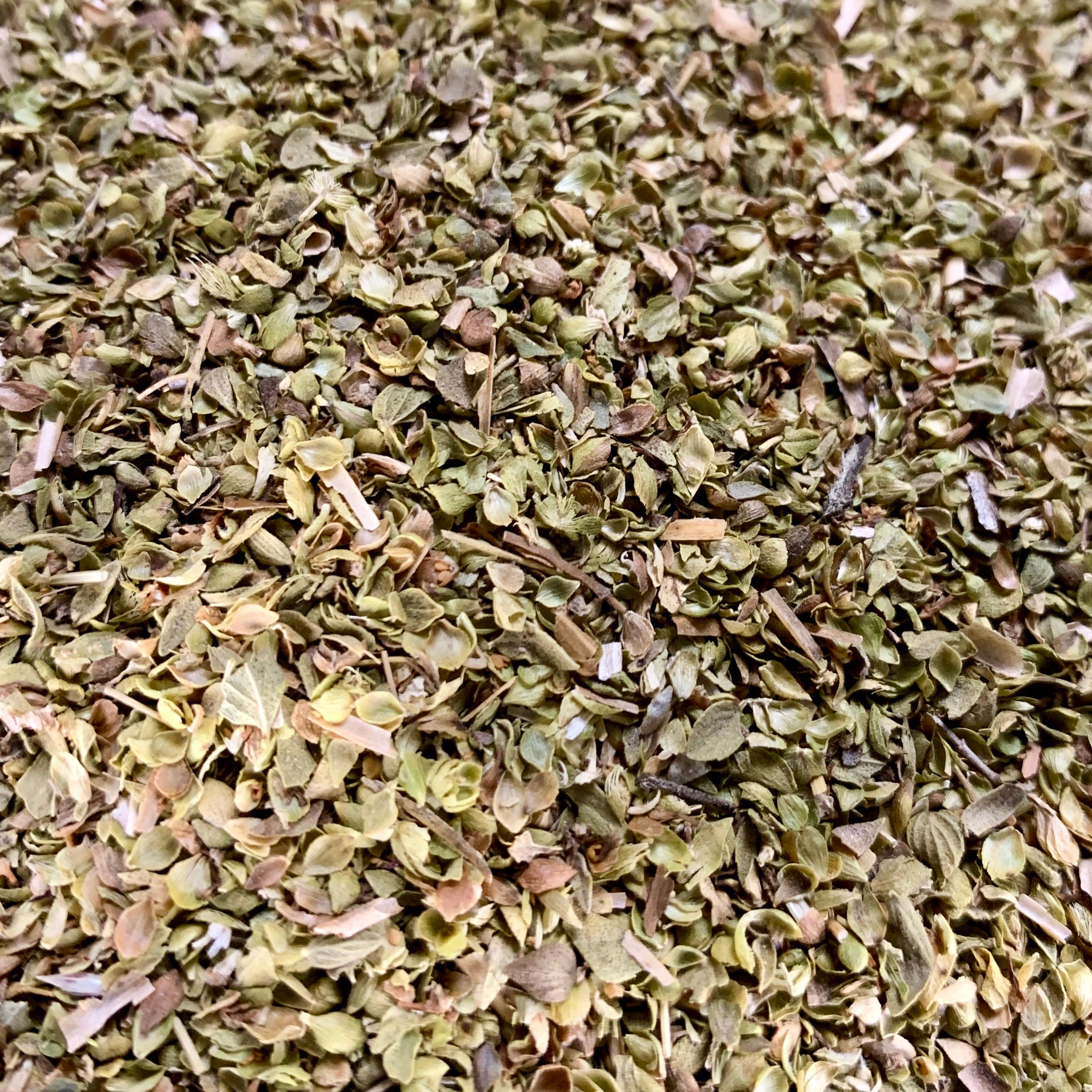 Oregano (Origanum sp)