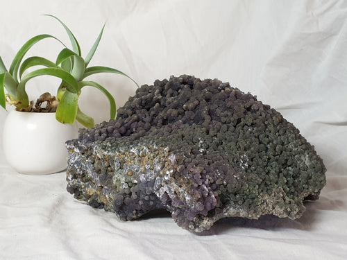 Huge Grape Agate crystal specimen!