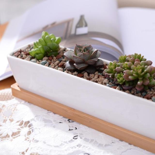 Charlotte - Classic Bonsai Planter Set
