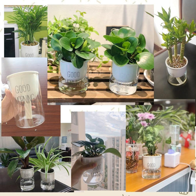 Automatic Watering Planter Pot - Silky decor